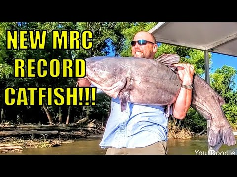 NEW RECORD BLUE CATFISH Caught On Muddy River Catfishing BLUE CAT ROD.