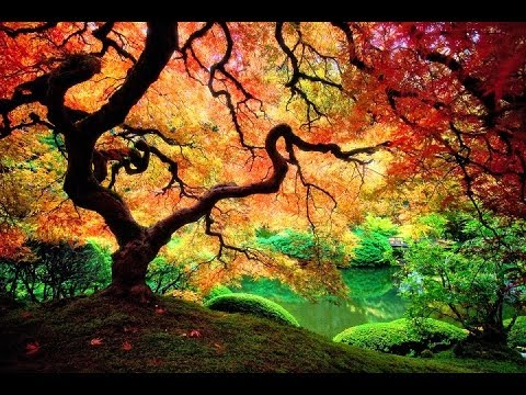 Forest/Goa/Twilight/Progressive/Full On PsyTrance Mix - 2014 - ToPsy Turvey - EckoTek Soundsystem