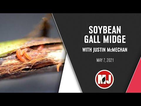 Soybean Gall Midge | Justin McMechan | May 7, 2021