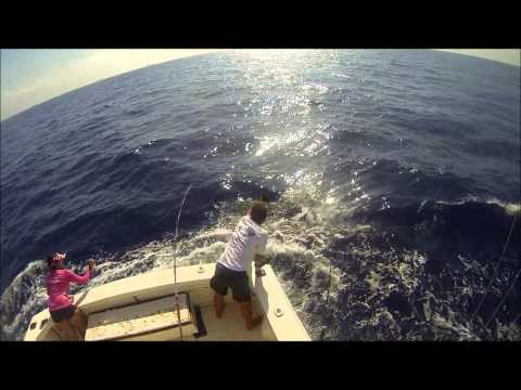 The Reel Teasers Surprise Driftwood Fishing Charters Aruba