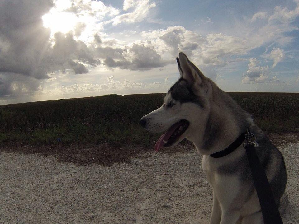 Husky Walking Trail (HD)