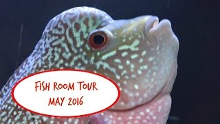 Fish Room Tour - 39 Tanks! - May, 2016(Video update on all 39 tanks! Enjoy and thanks for Watching! I'd love it if you'd SUBSCRIBE to my channel! Click the link below!, 2016-05-14T14:47:22.000Z)
