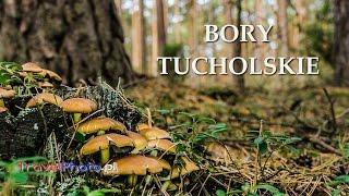 Polska - Bory Tucholskie, Tuchola i okolice (Tuchola Forest - POLAND)