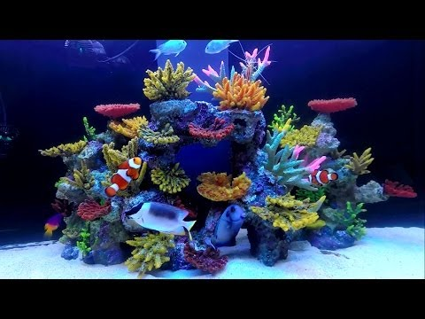 Aqua Reef 400 White Set Up HD (Greenacres)
