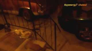 'goldie' The Stray Cat Makes His Daily Visit