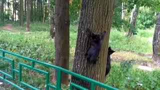 Черные котята захватили дерево