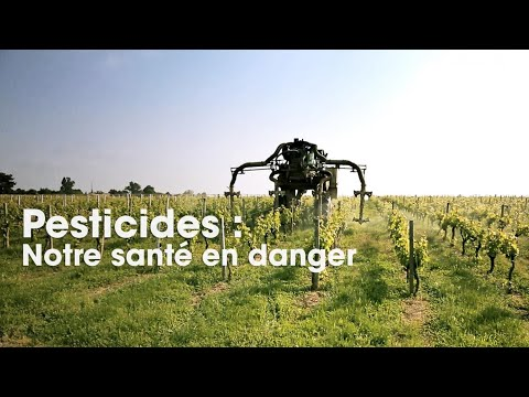 Pesticides : notre santé en danger - Cash Impact (intégrale)