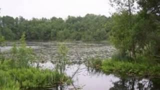 5,35ha działka  na sprzedaż gm.Orzysz Osiki (warunki zabudowy na siedlisko i stajnie)