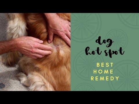 Best Dog Hot Spot Home Remedy