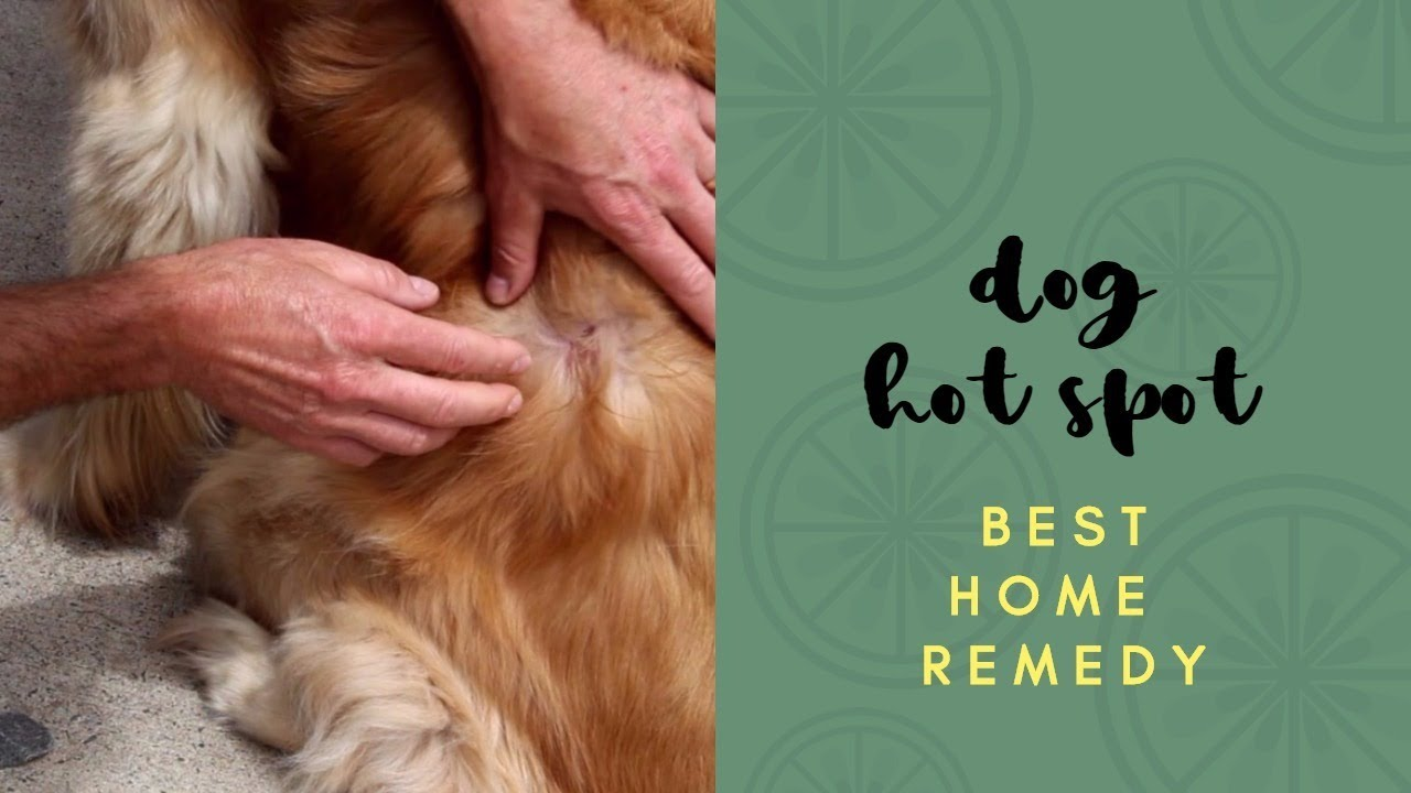 Home Remedy For Golden Retriever Hotspots