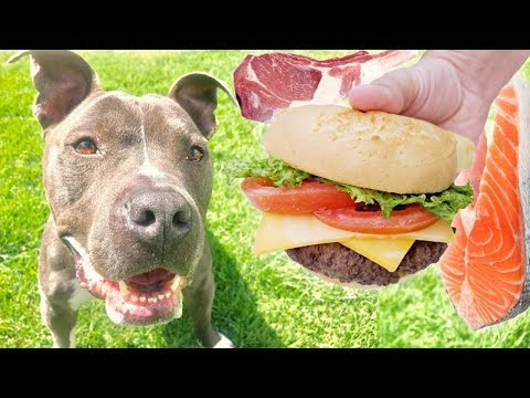 Letting a Homeless Pitbull Pick His First Meal!
