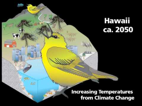 An Eye on the Sky: Weather and Climate in the U.S. Tropical Pacific