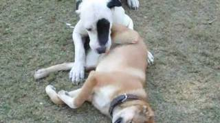 Bully Kutta and the Afghan koochi ( The Warrior and the Wild Man)