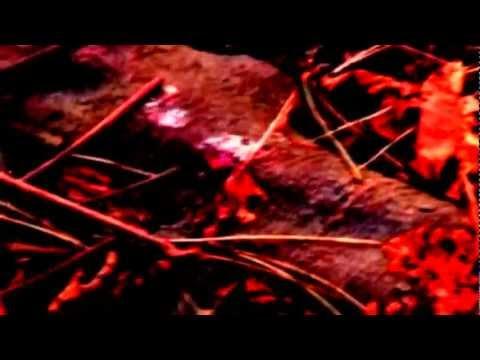 Hunter-Gatherer Arc-En-Ciel I Dreamed I Was A Footstep In The Trail Of A Murderer