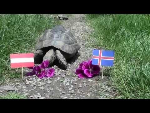 Island Oesterreich