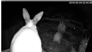 Our Rabbitry Live Stream with night vision camera.