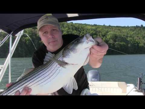 Windy Day Freshwater Striper Fishing - Beltzville Lake