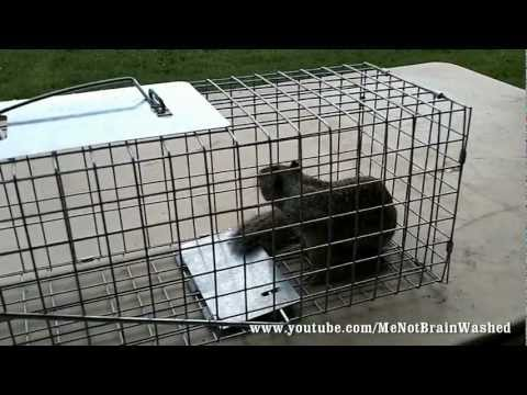 Live Animal Trap for Squirrels