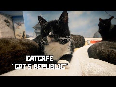 "Catcafe ""Cat's Republic"". Alternative Cat Shelter. St Petersburg, Russia"