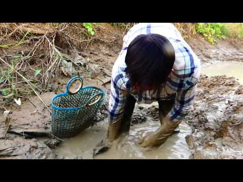 Oh Amazing Fishing! Today I'm Spilling Catch Fish A Lot Catch Fish In Mud & Catfish Catch By Hand
