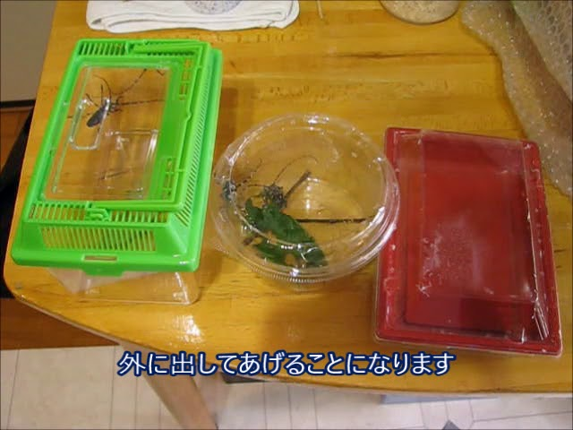 えさ カミキリムシ カミキリムシを育てよう!カミキリムシが食べる餌や注意点まとめ