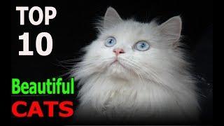 Top 10 beautiful cat breeds | Top 10 animals