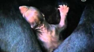 В зоопарке родился «солнечный» медвежонок