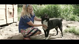 """Каждый имеет право на жизнь (проект """"Смсфинанс"""" и Базы реабилитации животных)"""