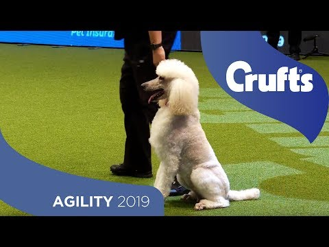 Agility - Crufts Large Novice And Medium ABC Final - Agility - Part 2 | Crufts 2019