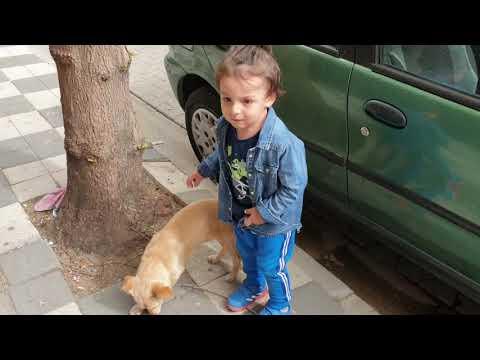 Miraç Ege Paticik Köpekçikle Top Oynadı. Koşarken Düştü Ağladı | Eğlenceli Çocuk Videosu