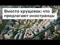 Вместо хрущевок: что иностранцы предлагают построить в Москве