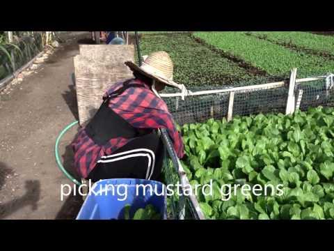 New Roots Community Farm - San Diego December 9, 2015