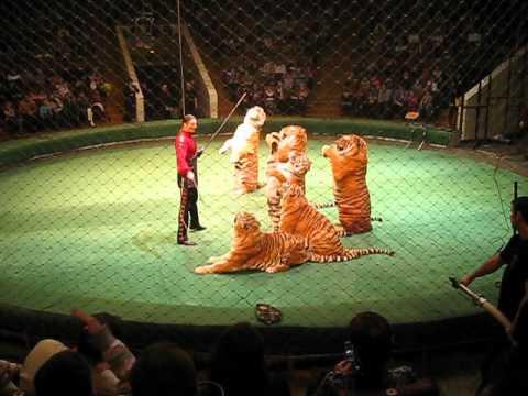 Видео, Шоу братьев Запашных. Тигры в цирке. Цирк братьев запашных