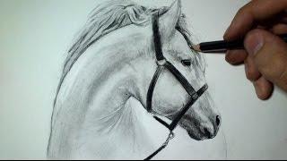 comment dessiner un cheval en 6 etape