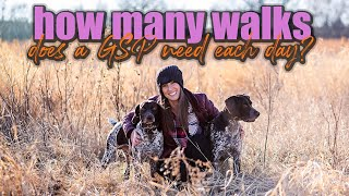 How Many Walks Does A Dog Need Each Day?
