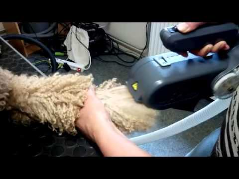 Brushing a poodle paw with the ADB