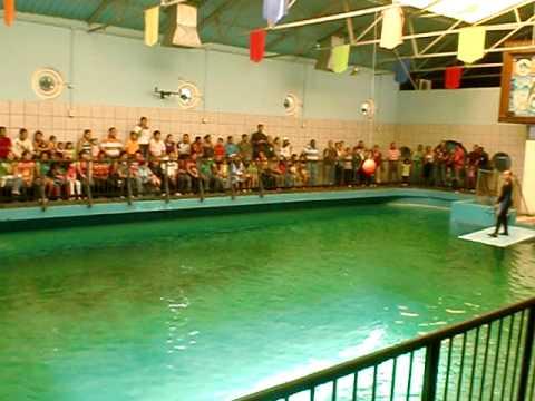 El acuario de valencia venezuela youtube for Acuario valencia precio