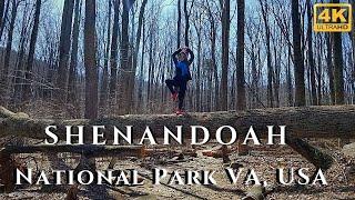 Shenandoah National Park Hiking Virginia 4k