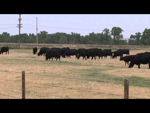 Grazing Land Leases - Market Journal - April 26, 2013