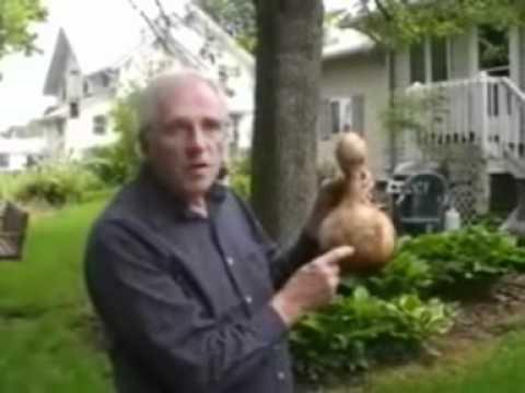 Making Wren House From Gourd