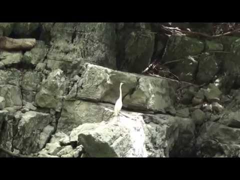 Cañon del Sumidero Chiapas - Sumidero Canyon Chiapas, Mexico