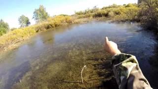 Охота на утку Новосибирск