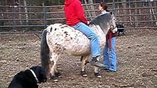Worlds biggest pony rider.