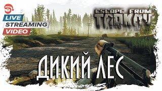Дикий лес [Escape from Tarkov]