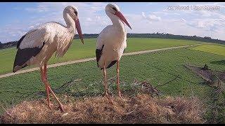 Bociany - kamera na bocianie gniazdo pod Zambrowem [White Storks in Poland] - live cam - zambrow.org