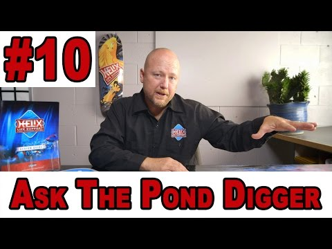 Frog Pond, Koi Pond Depth, Separating Koi & Goldfish - Ask T.P.D. Show 10