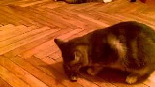 2008 01 14 Бурундук играет с мышкой