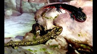 Класс Рептилии. Систематика