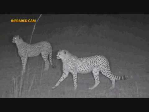 Safari Live's Masai Mara TV Special at 6:00 AM July 29, 2017