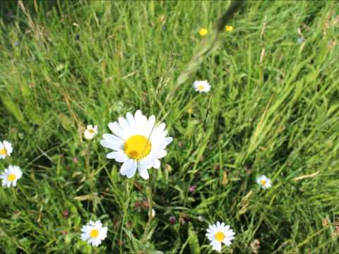Wie zarte Blumen